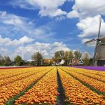 У Нідерландах запропонували посилити регулювання криптовалюта і ICO